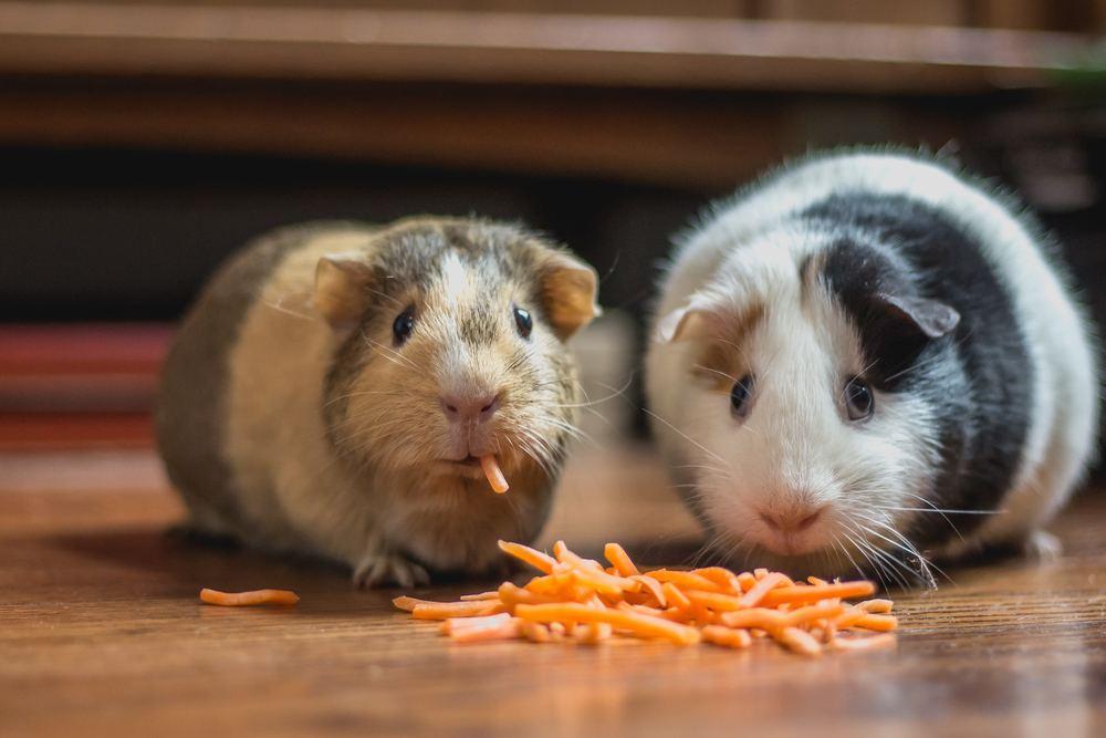 Husdjur och matvanor